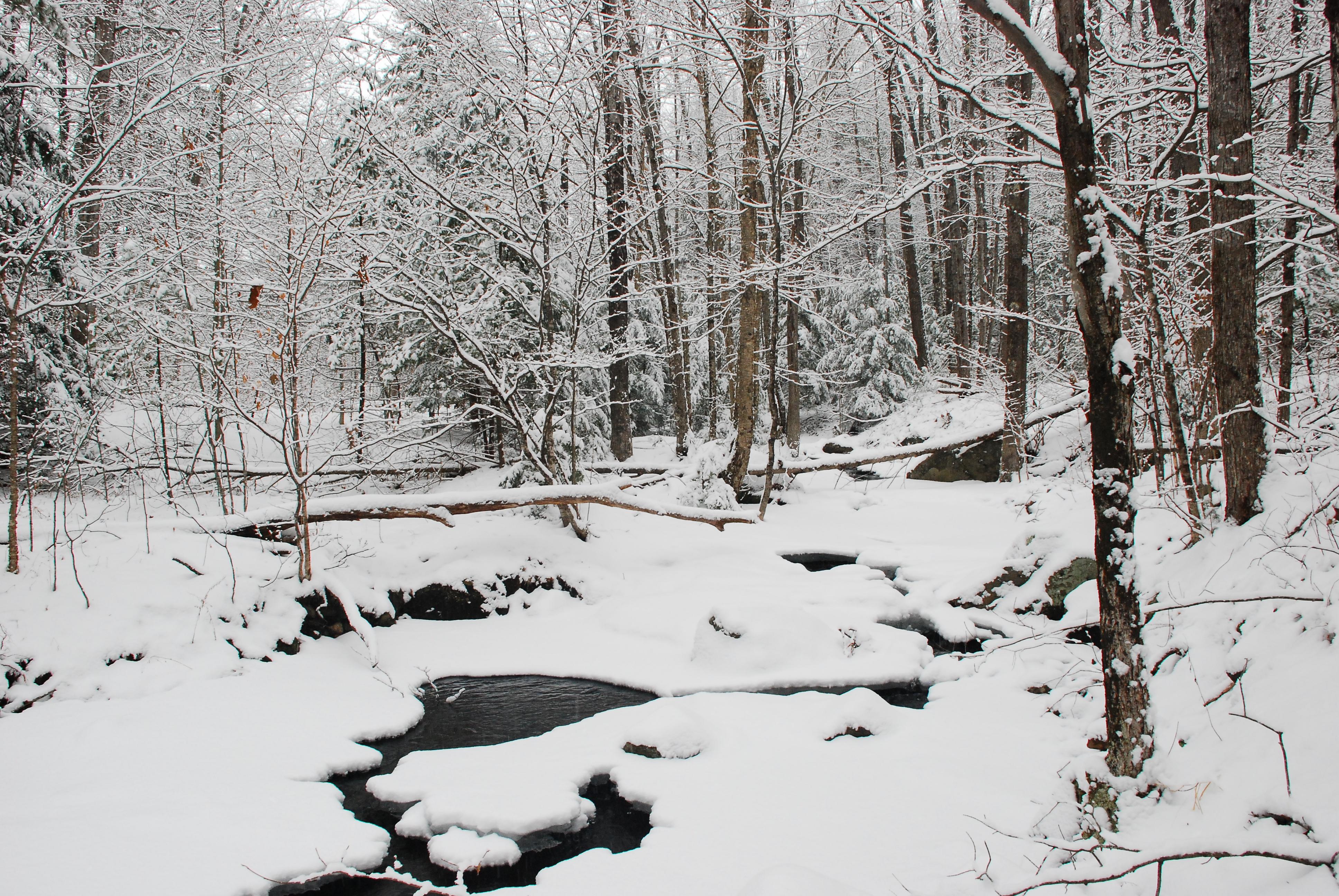 woods.snow.1
